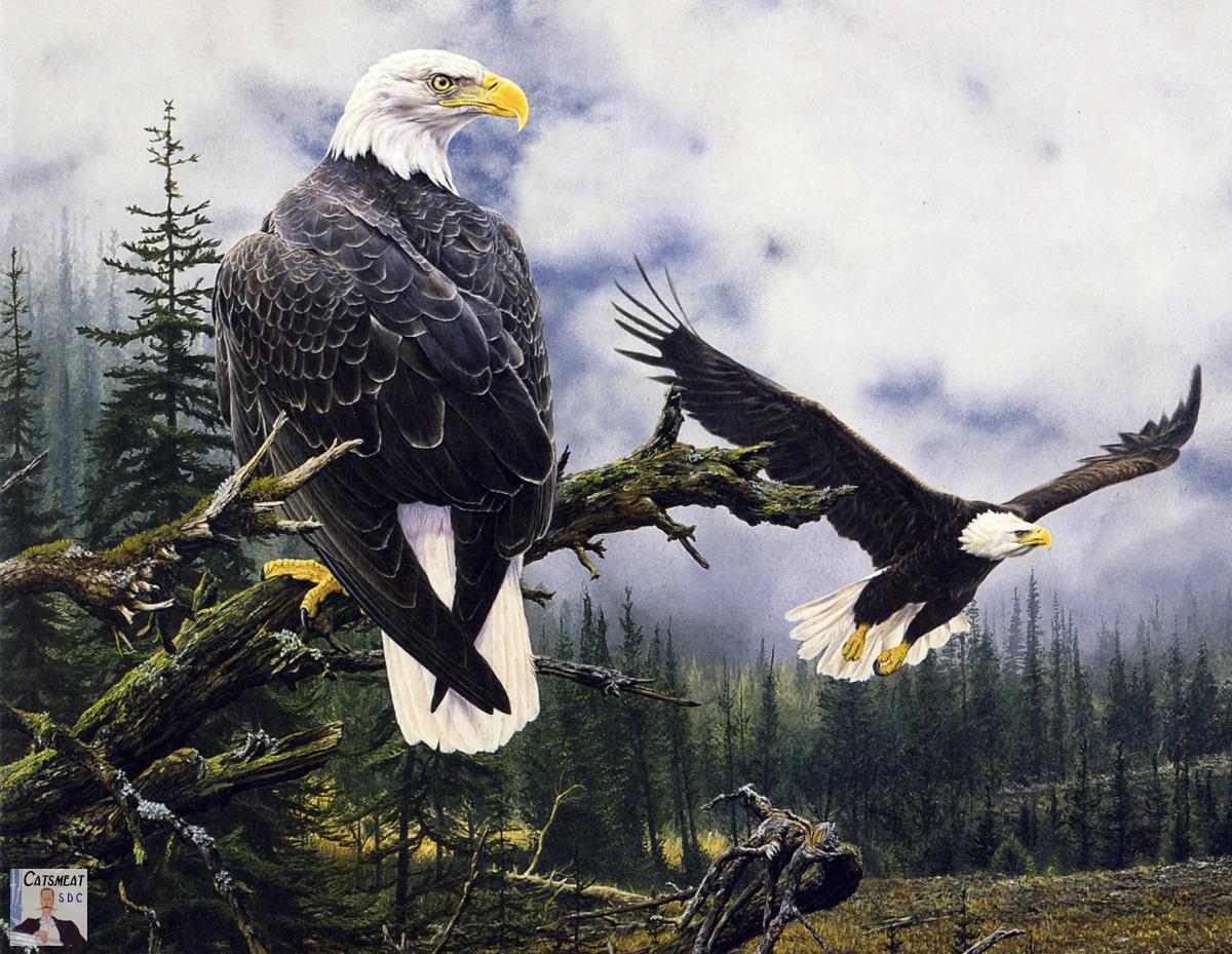 American Eagle Oil Paintings