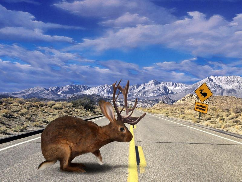 Jackalope Crossing.jpg