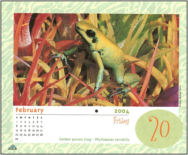 [xLR8 Frogs 2004 Box Calendar] 096 Golden poison frog - Phyllobates terribilis; Image ONLY