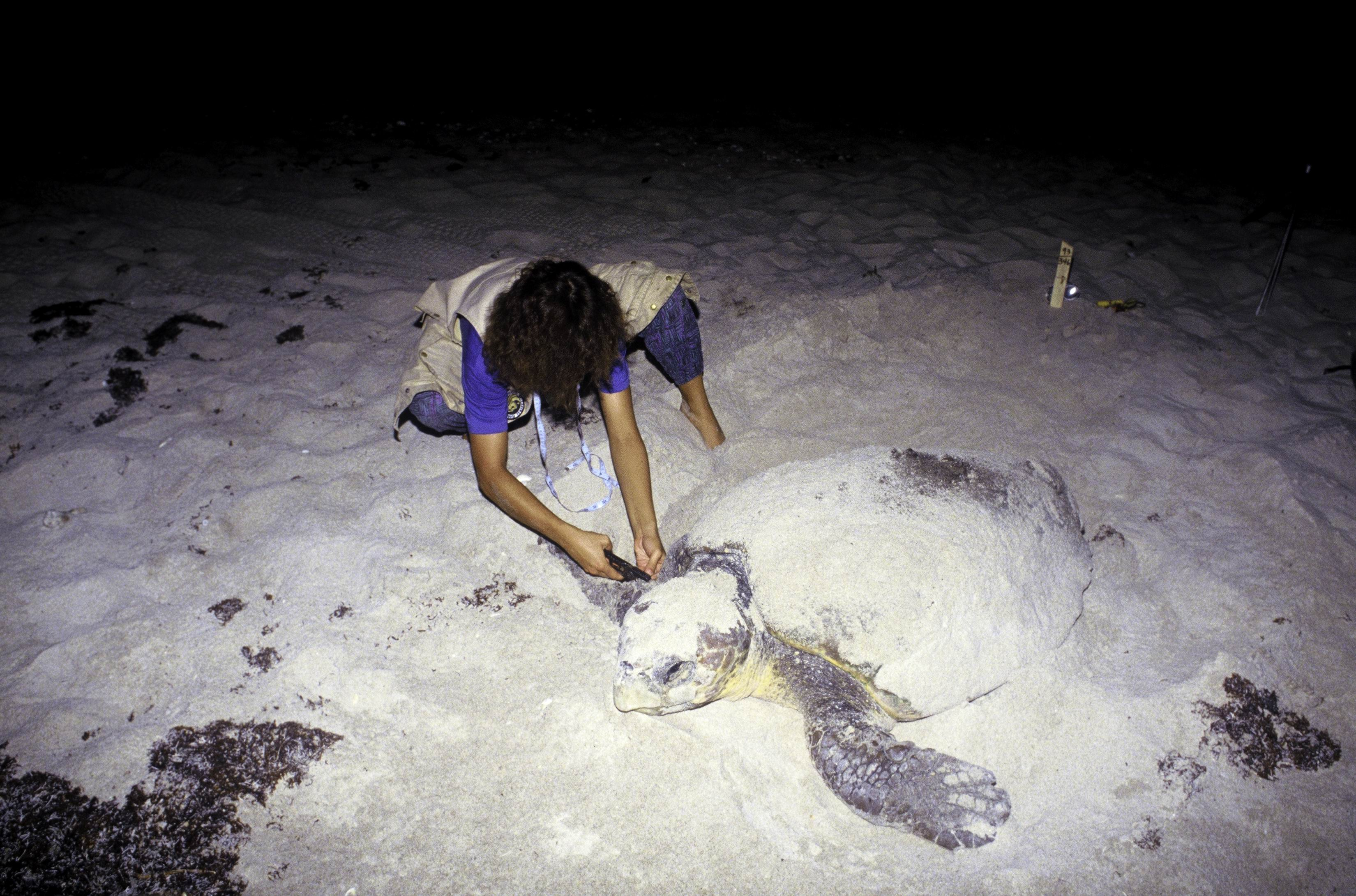 caretta dating site Local obituary notices in caretta, wv  caretta caretta change city news forums crime dating real-time news jobs obituaries  caretta obituaries local obituary notices in caretta, wv .