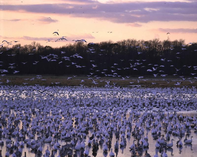 Bombay Hook National Wildlife Refuge, Delaware.jpg