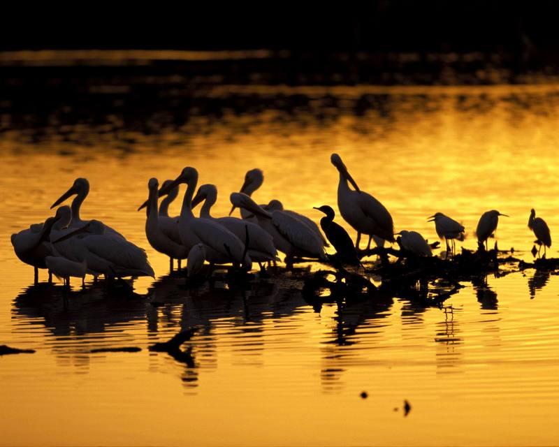 J[1]. N. Ding Darling National Wildlife Refuge.jpg