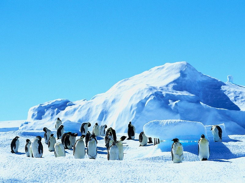 Screen Themes - Arctic Adventures - Emperor Penguins on Ice Field; DISPLAY FULL IMAGE.