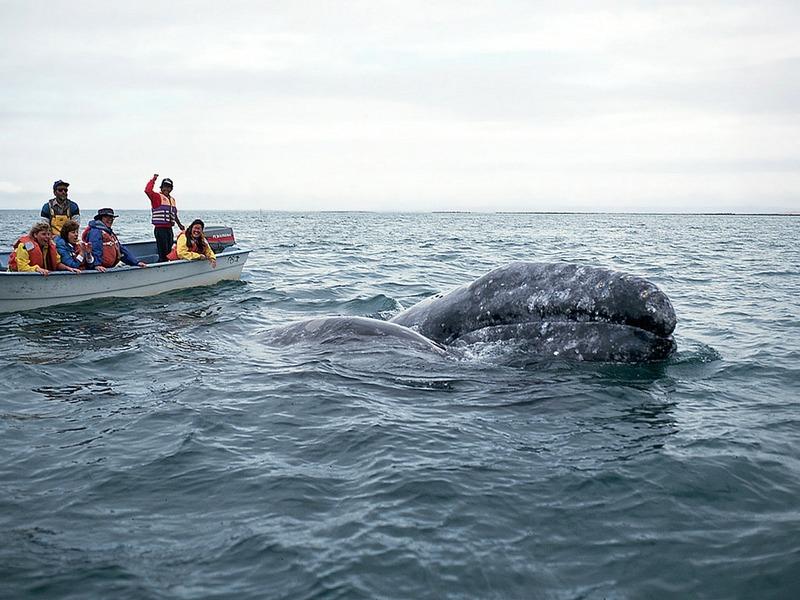 ST-DOWH001@Whale Watchers & Gray Whale.jpg