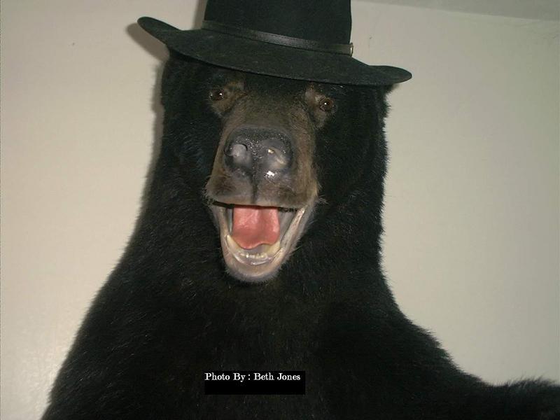 Black bear family by deseonocturno on DeviantArt |Funny Black Bear Family