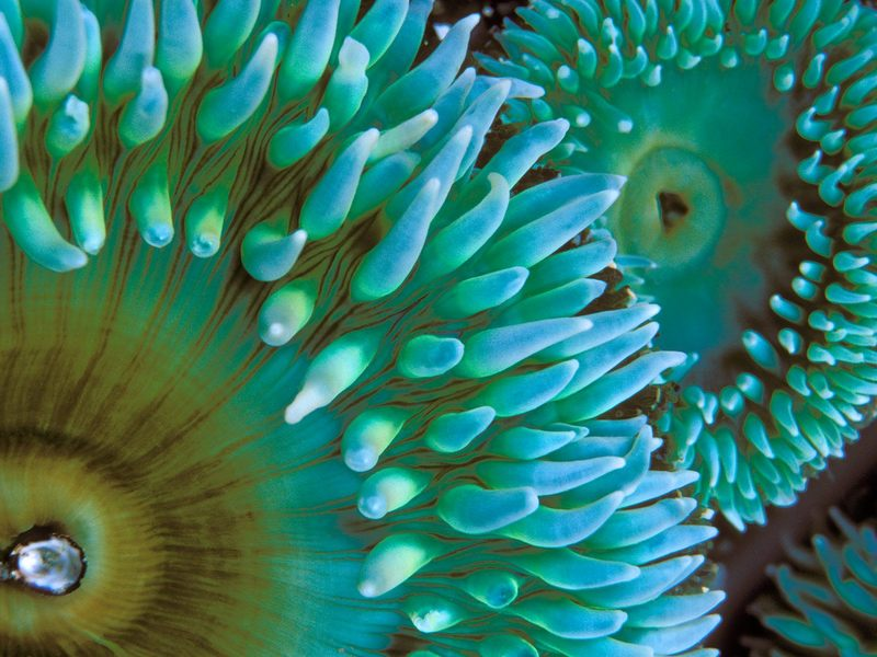 [Daily Photo CD03] Sea Anemone; DISPLAY FULL IMAGE.