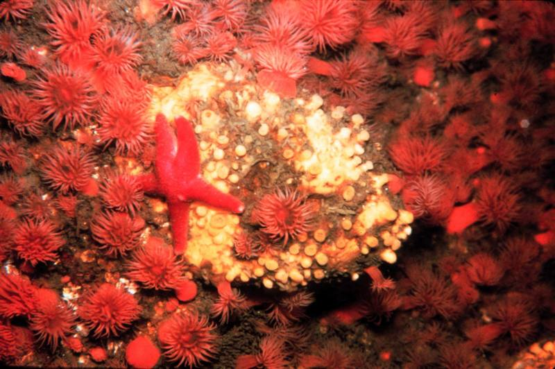 Sea Star & Sea Anemone <!--말미잘-->; DISPLAY FULL IMAGE.