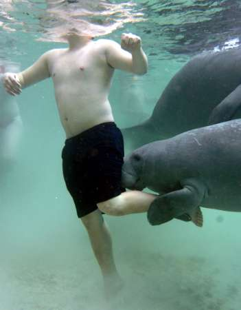 A man has a playful endangered Manatee holds [REUTERS 2005-02-09]; Image ONLY