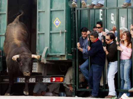 People watch as a bull is... Spain [REUTERS 2005-03-27]; Image ONLY