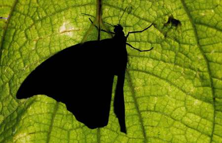 Butterfly, Costa Rica [REUTERS 2005-05-12]; Image ONLY