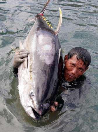 Yellowfin Tuna, Philippines [REUTERS 2005-05-31]; Image ONLY