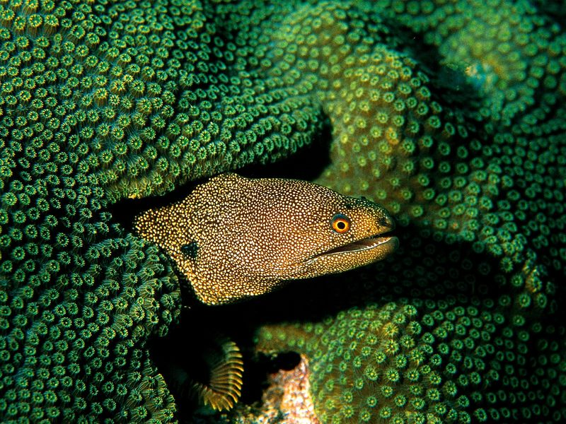 Moray Eel; DISPLAY FULL IMAGE.