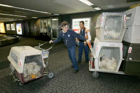 Chickens Rescued, USA [REUTERS 2005-09-17]; Image ONLY