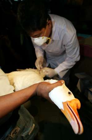 Goose, Indonesia [REUTERS 2005-09-20]; Image ONLY