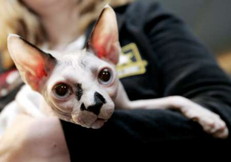 Sphynx Cat, USA [REUTERS 2005-10-05]; Image ONLY
