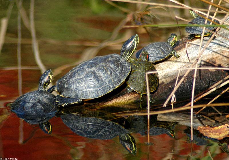 Turtles (sliders)001.jpg