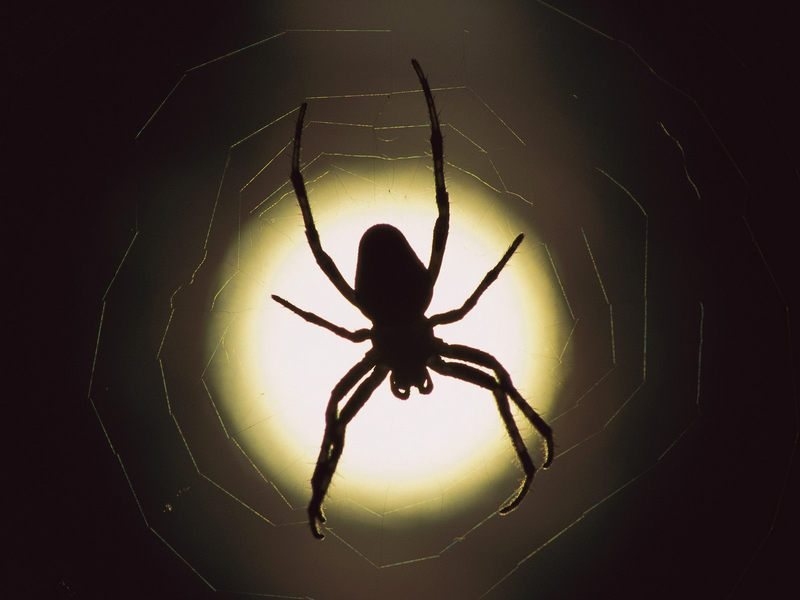 Halloween Spider Silhouette Images