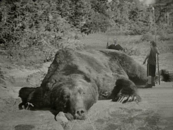 Giant Kodiak bear?; Image ONLY