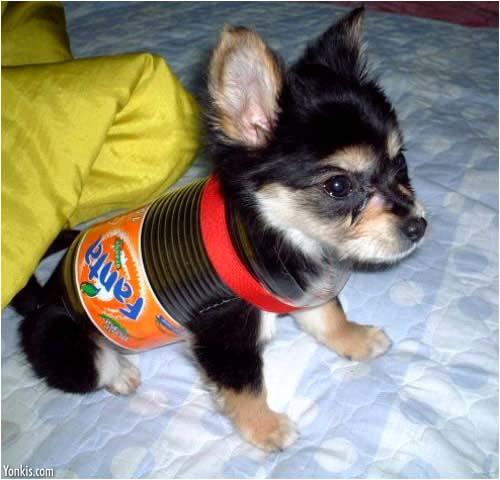 Dog in Jug.jpg
