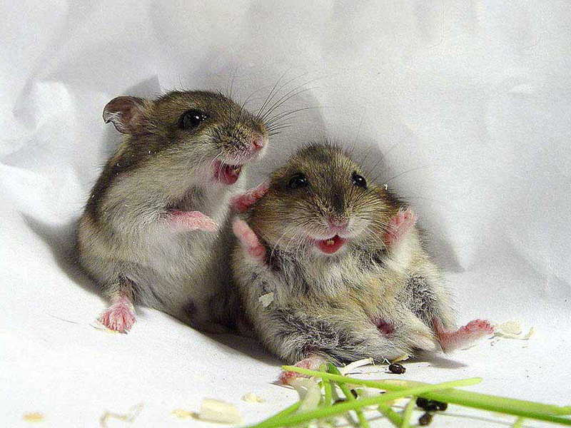Happy Mice.jpg