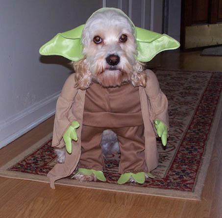 yoda dog.jpg