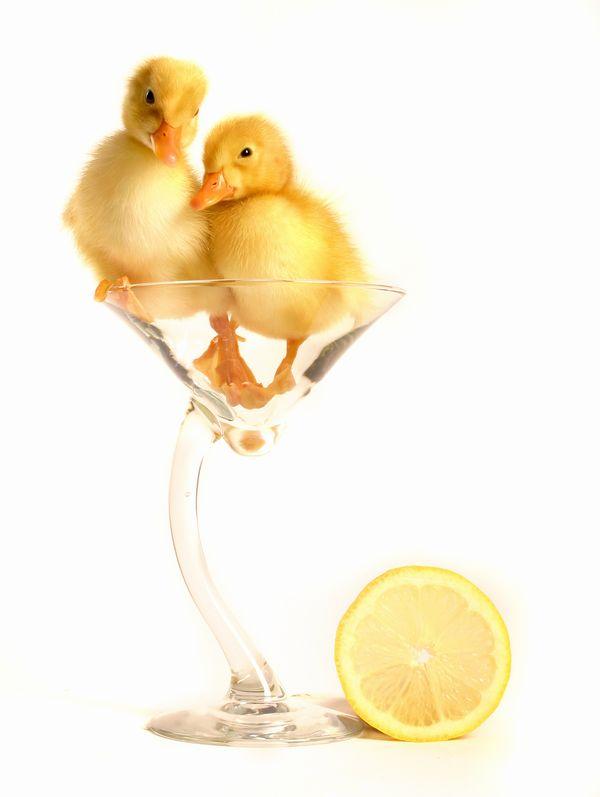 Two Drunk Chicks.jpg