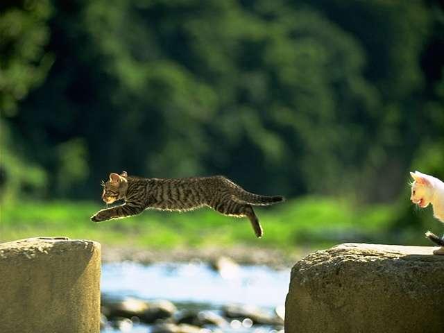 cat 0015.jpg
