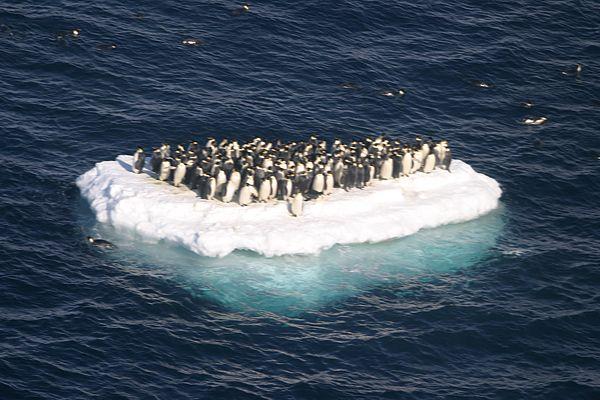 penguin island.jpg