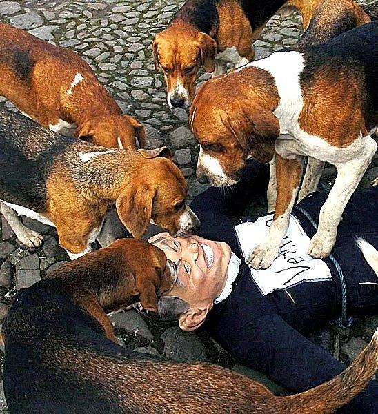 Five dogs.jpg