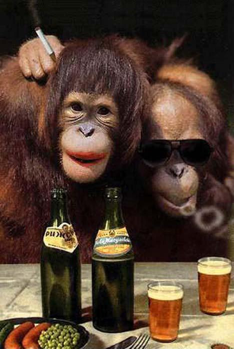 Hippie Orangutans.jpg
