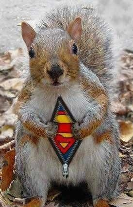 Super Squirrel.jpg