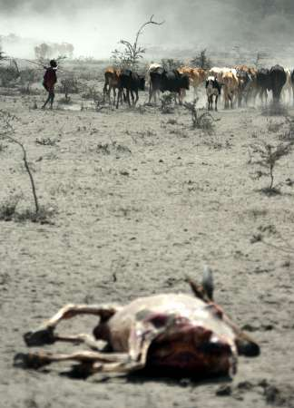 Cattle, Maasai, Drought, Kenya [REUTERS 2006-01-13]; Image ONLY