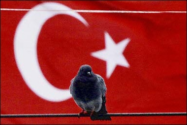 Pigeon, Bird Flu, Turkey [AFP 2006-01-14]; Image ONLY