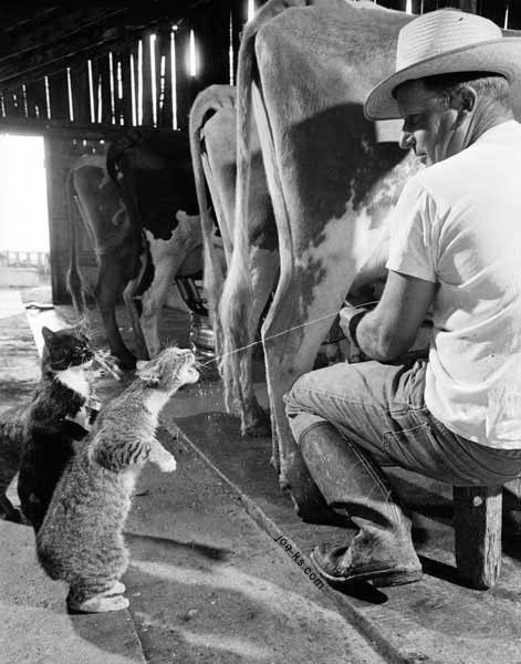 Farm Cats.jpg