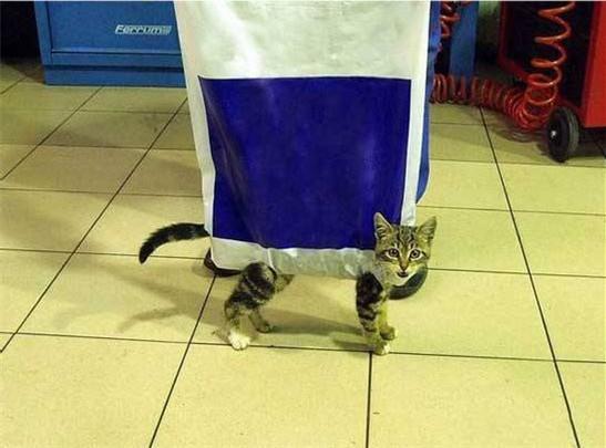 walk a cat.jpg