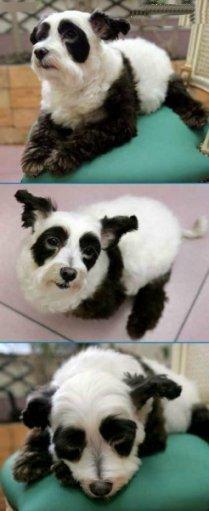 panda dog.jpg