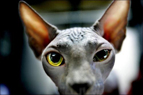 brookstone cat ear headphones review