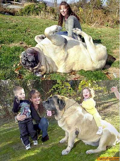 FunnyPart-com-bigdog.jpg