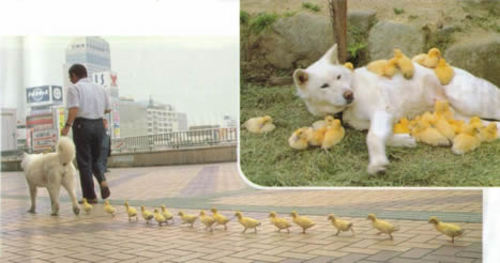 ducks.jpg