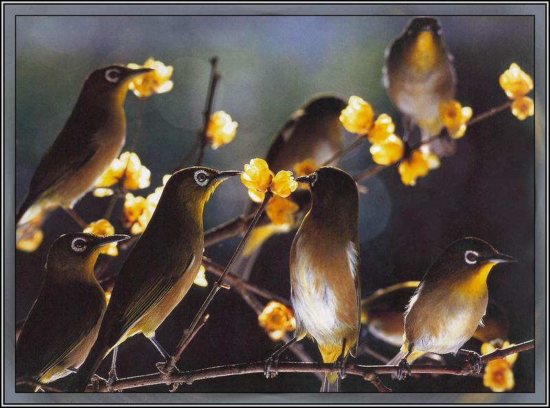 BW Seven Birds.jpg