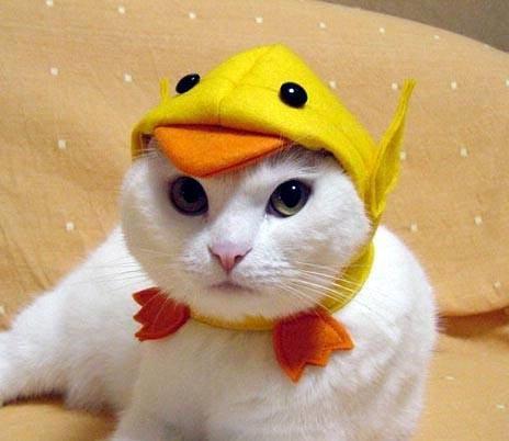 cap cat.jpg