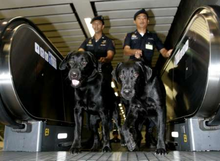 Sniffer Dogs, Thailand [REUTERS 2006-02-10]; Image ONLY