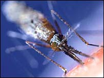 Frog 'key to mosquito repellents' [BBC 2006-02-22]; Image ONLY