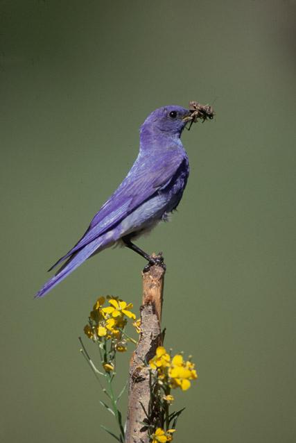 birdbluebird3030204.jpg