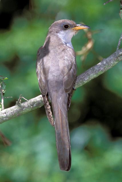 birdcuckoo2030204.jpg