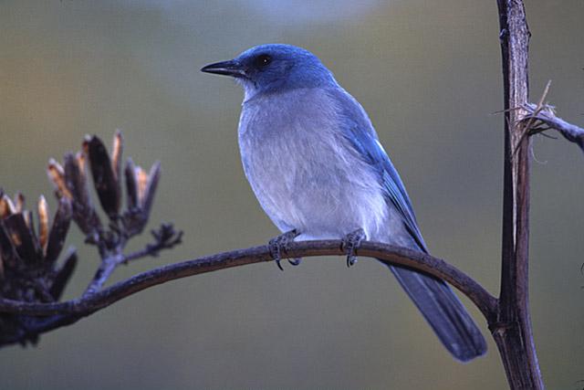 birdjay3020304.jpg