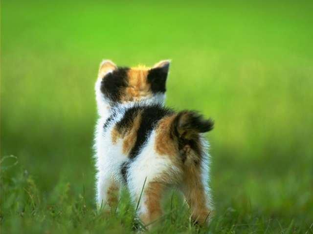 Kitten ass.jpg