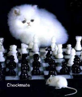 checkmate cat.jpg