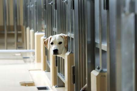 Young Guide Dog, Japan [REUTERS 2006-03-22]; Image ONLY