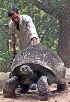 250-year-old Aldabra Tortoise died, India [AP 2006-03-24]; Image ONLY